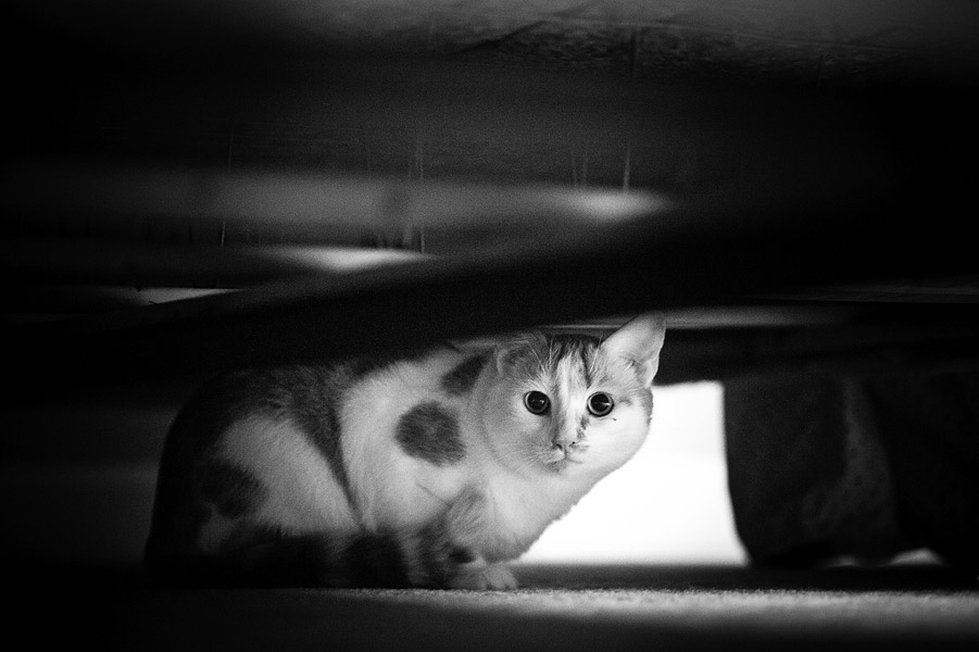 cat-photography-fidojournalism-010