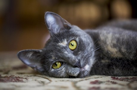 cat-photography-fidojournalism-014