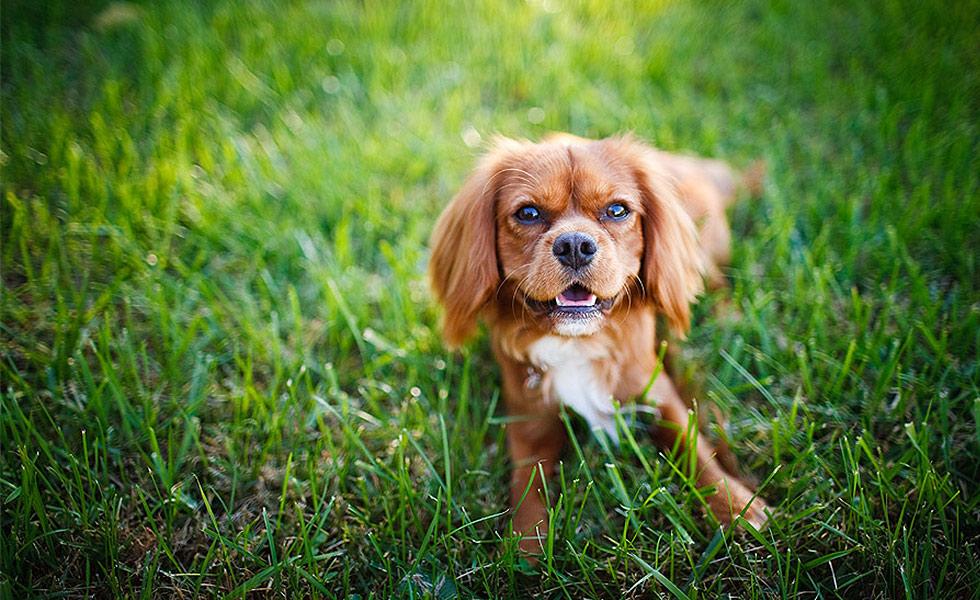 [Image: dog-photography1.jpg]