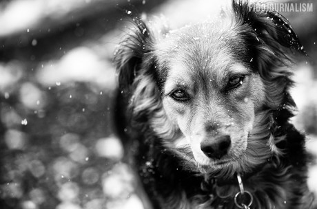 140225-snow-dogs-004