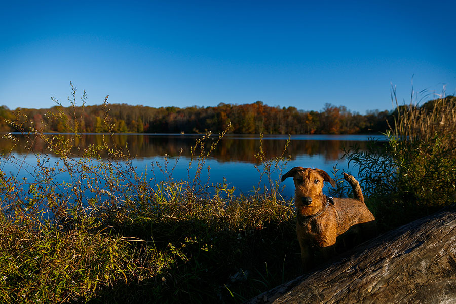 Dog at the Lake | MD Pet Photographer | FidoJournalism Pet Photography